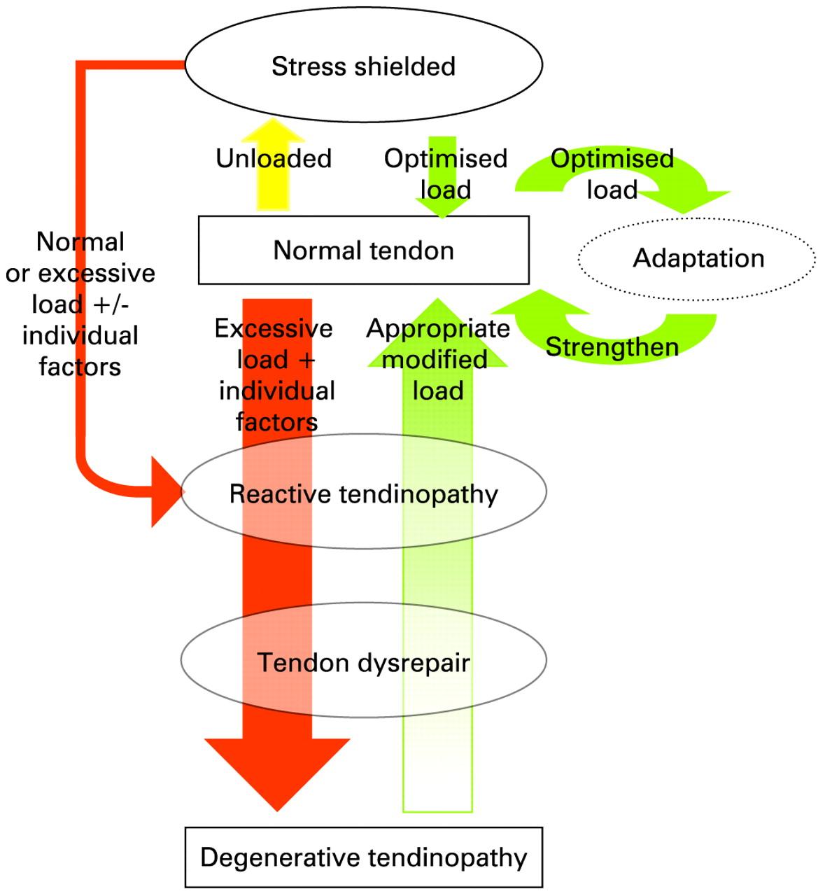 Tendinopathy continuum