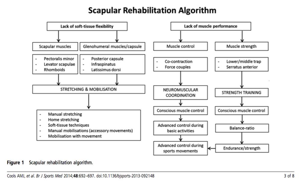 Scapular rehabilitation algorithm
